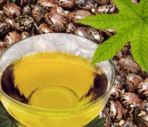 castor-oil-and-castor-oil-seeds-for