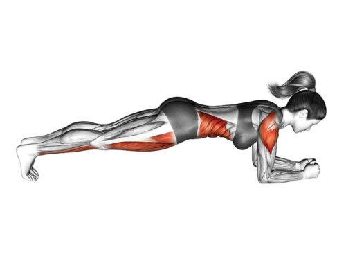 Plank ထောက်လိုက်ရင် သင့်ခန္ဓာကိုယ်အချိုးအစား ဘယ်လိုပြောင်းလဲသွားနိုင်မလဲ