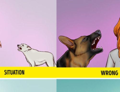 လမ်းမှာ ခွေးဟောင်တာ ခွေးလိုက်တာခံရရင် ကိုယ့်ကိုယ်ကိုယ် ဘယ်လိုနည်းနဲ့ကာကွယ်မလဲ